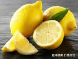大量批发柠檬苗,嫁接柠檬苗的价格