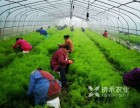 重慶協禾農業有限公司提供大量優質白芨.黃精.重樓.天冬種苗