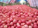 山东金帅苹果行情常年诚信供应苹果,山东红星苹果今日价格。