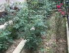 世合 理想大地 稀缺多层带大花园,房型好南北通透得房率世合·理想