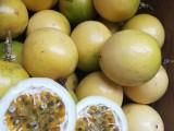 芭乐味黄金百香果苗批发百香果的营养价值