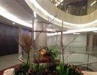 乌鲁木齐同城鲜花速递市区免费送花较快2小时植物租摆