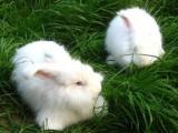 养兔之家yangtuzhijia.com中国养兔网