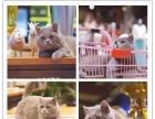 周末所有猫咪特价出售 百姓价格 保健康 疫苗齐全