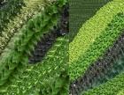 天津植物墙生态墙绿化墙植物背景墙