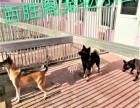 成寿寺宠物寄养 长期提供猫猫狗狗寄养服务 房间有暖气可接送