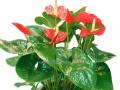 办公室、家庭绿植盆栽—批发销售、鲜花全城配送