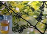 食品级木姜子油价格 食品级木姜子油生产厂家