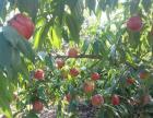 生态葡萄采摘园