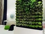 成都高新西区绿植租售,植物墙,私家花园,花草栽种
