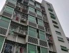 小梅沙公交站往东12分钟距离,公寓短租260元/半月起租