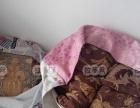 专业窗帘干洗洗涤公司-上门拆洗各类窗帘-沙发清洗