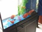 深圳宝安桃源居附近有观赏鱼养护的师傅吗 可上门洗鱼缸护理