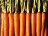 胡萝卜批发 专业人员种植 无公害绿色蔬菜新鲜优质胡萝卜供应批发
