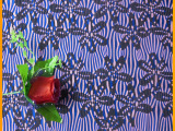 新款蕾丝面料 圆机蕾丝 针织蕾丝圆机面料 弹力蕾丝 印花染色面料