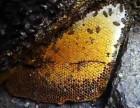 土蜂蜜代理源头货源