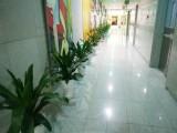 绿植盆栽租赁 鲜花绿植出售 专业团队值得信赖