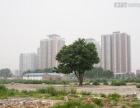 梧田北村12亩土地出租 建筑材料堆放 驾校