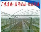 江西省温室大棚钢架厂,热镀锌管加盟 农业用具