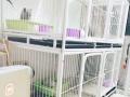 温州茶山大学城宠物寄养,猫咪