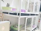 茶山大学城宠物寄养猫咪。