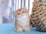 大理猫舍 现货出售 全国包邮 本地送货上门