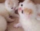红小胖加菲宝宝们