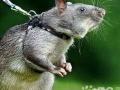 南通灭鼠公司南通灭蟑螂公司南通专业灭老鼠公司