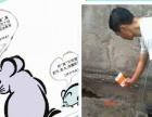 郑州专业 灭鼠 灭蟑螂 灭蚊 灭苍蝇 灭跳蚤 灭臭