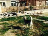 花园桥宠物寄养猫狗单独寄养长期寄养托管宠物可接送