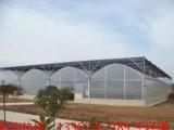 专业承建各类温室工程