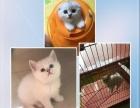 猫の家猫舍保证品质
