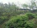 低价转让泸州市泸县喻寺镇300亩林地