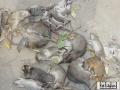 扬州宝应哪里有杀鼠公司宝应灭白蚁宝应灭老鼠扬州宝应杀蟑螂