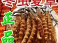 武汉市内回收冬虫夏草 虽然是中药材却是礼品市场热卖价格金贵