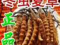 广州市收购(青/藏/川主产区)冬虫夏草/性价比高30%以上