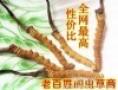 草虫(一带一路(之)国内线)平顶山市回收冬虫夏草