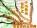 北京市收购冬虫夏草(属虫草科丶中药材丶非保健食品)礼品时尚