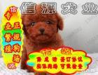 买纯种健康泰迪熊犬 赠送用品 - 签质保协议
