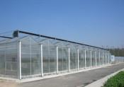 新型蔬菜采摘园设计-专业新型蔬菜采摘园厂家
