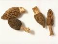 羊肚菌 土元 天麻 灵芝 食用菌种植,诚邀加盟合作