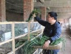 湖北隆润农业豚鼠的饮食与繁殖