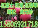 陕西膜袋红富士苹果价格 11K