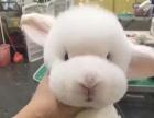 兔子宠物美容/上门到家服务/洗澡+造型200