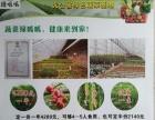 葫芦岛绿呱呱蔬菜免费配送