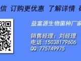 郑州益富源潲水发酵剂喂猪爱吃预防拉稀提高免疫力