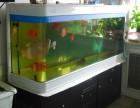 水簇效劳 昆明风水鱼缸洗濯 风水鱼缸造景结构设计