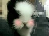 可爱的道奇猫猫兔