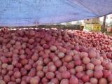 红富士苹果价格 山东红富士苹果价格