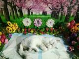 寵物火化服務-寵物殯葬,本地寵物火化咨詢